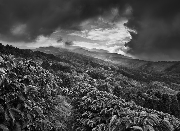 Sebastiao Salgado: Scent of a dream